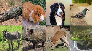 ¿Cuáles de estos animales te has comido?