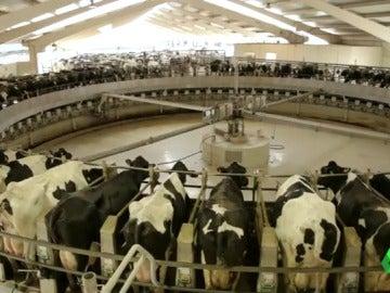 Frame 0.0 de: granja vacas