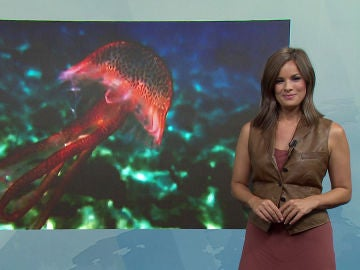 Mercedes Martín nos habla de las medusas