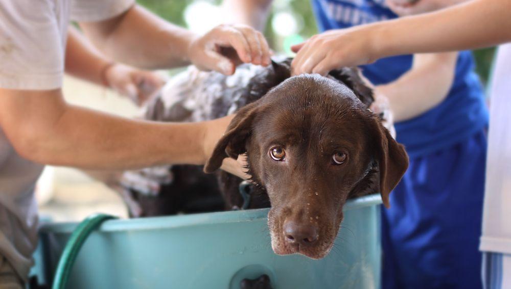 Bañando a un perro