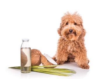Aceites aromáticos para perros