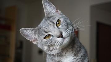 """Una mujer enseña a """"hablar"""" a su gato y éste se queja de la música"""