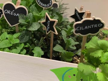 Las mejores plantas aromáticas para crear tu propio huerto casero