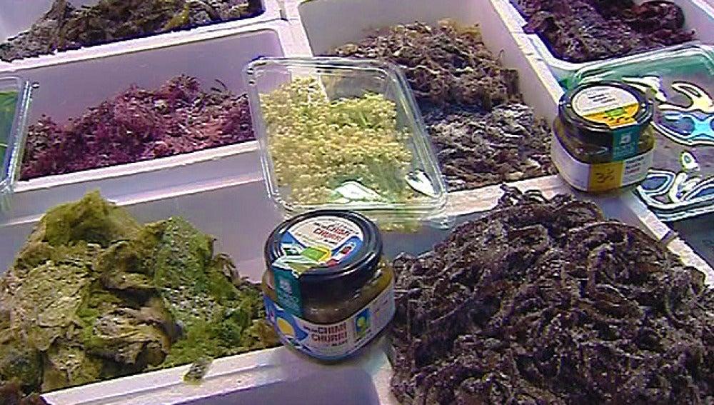 Acompaña tus platos con algas: pastas, arroces, ensaladas...¡Tú decides!