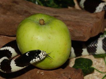 La dieta de la serpiente, ¿la penúltima chaladura?