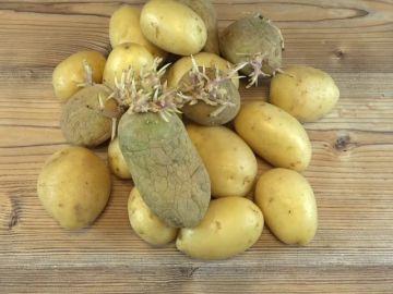 Cómo evitar que las patatas germinen