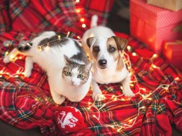 Mascotas y luces