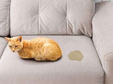 Pis en el sofá