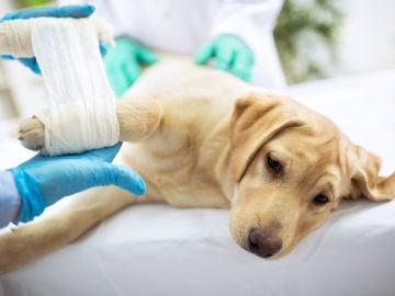 Cómo curar las heridas de las mascotas