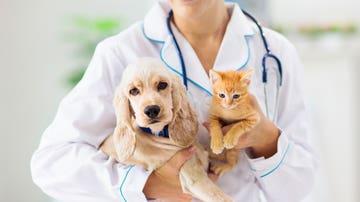 Veterinario con animalillos