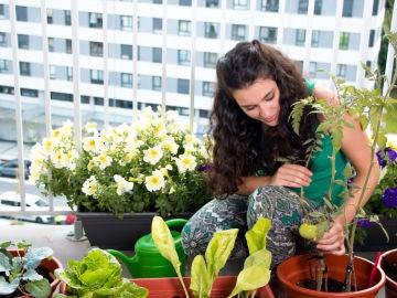 Cuidando las plantas