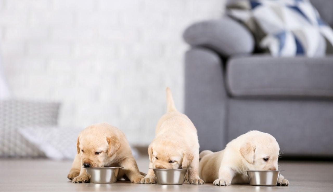 ¿Qué riesgos sanitarios supone el comercio ilegal de mascotas?
